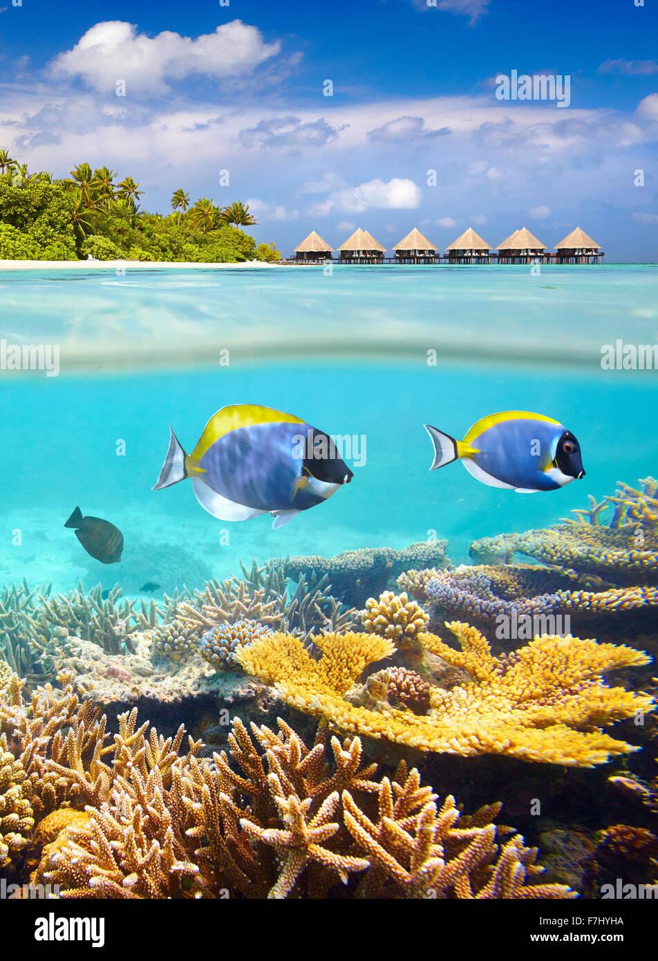 Isole delle Maldive - tropical vista subacquea con pesce e reef Immagini Stock