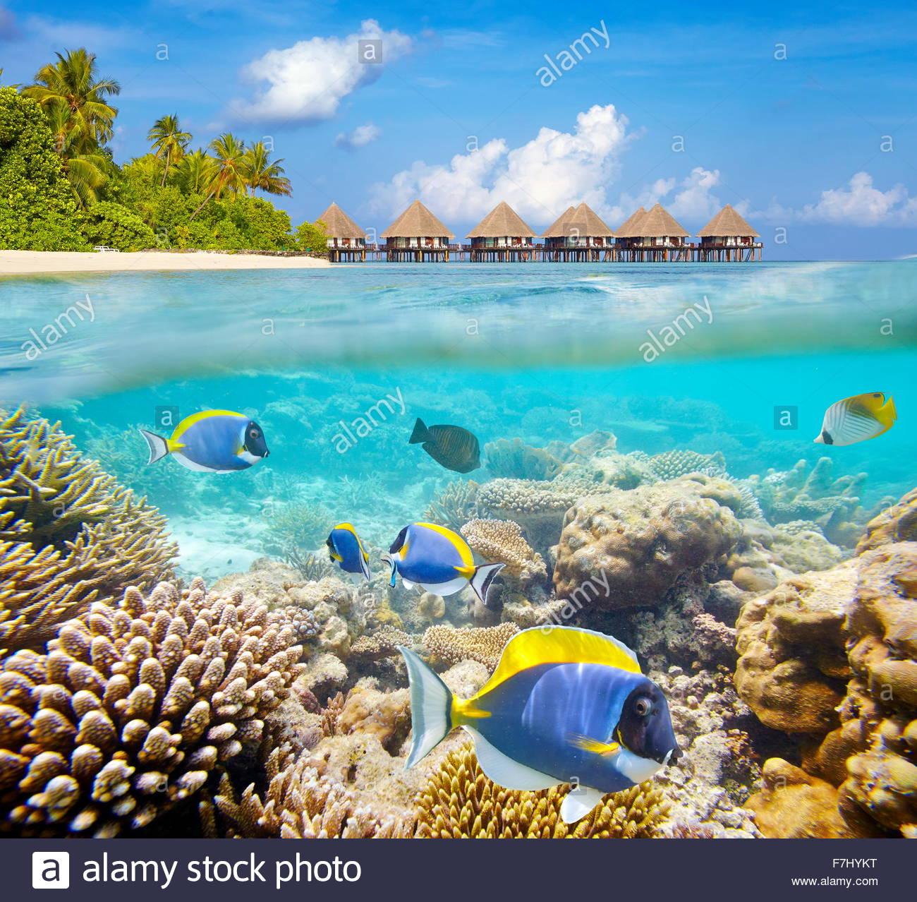 Isole delle Maldive, vista subacquea a pesci tropicali e reef Immagini Stock