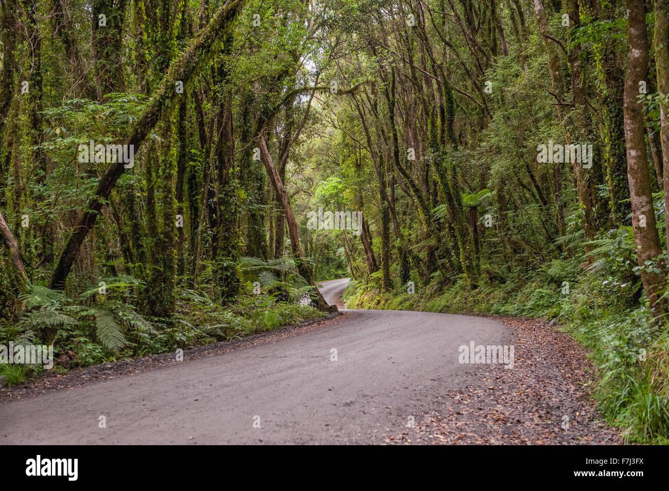 Avvolgimento su strada di ghiaia attraverso la foresta di pioggia in Glacier Country, nella costa occidentale dell'Isola Immagini Stock