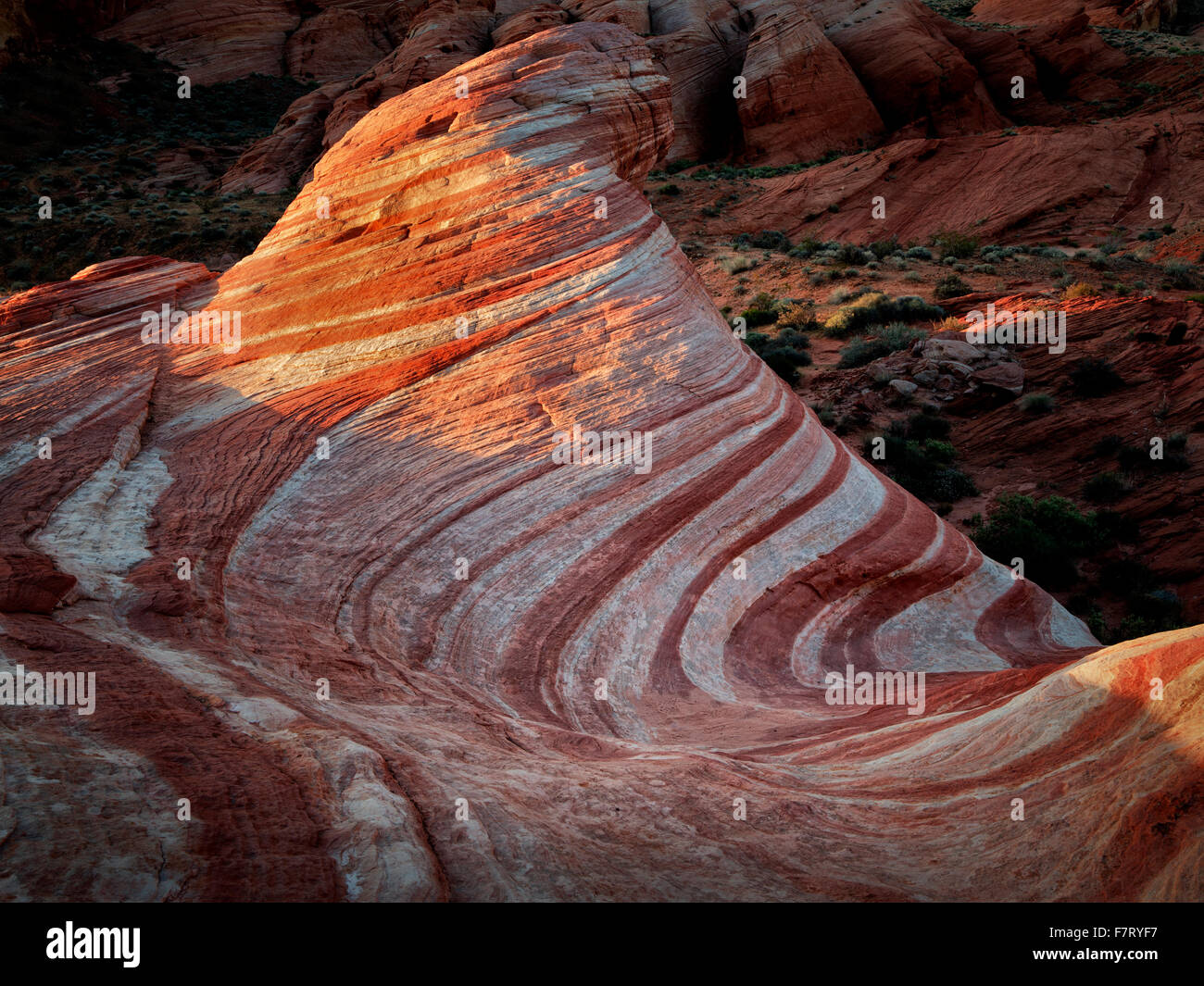 L'onda di fuoco alla prima luce. La valle del fuoco del parco statale, Nevada Foto Stock