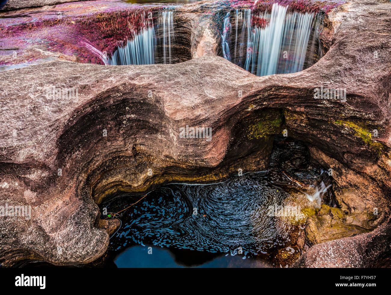 La cascata e colori vegetali a Cano Cristales, Colombia piante sottomarine (Macarenia clarigera) endemica al piccolo Immagini Stock