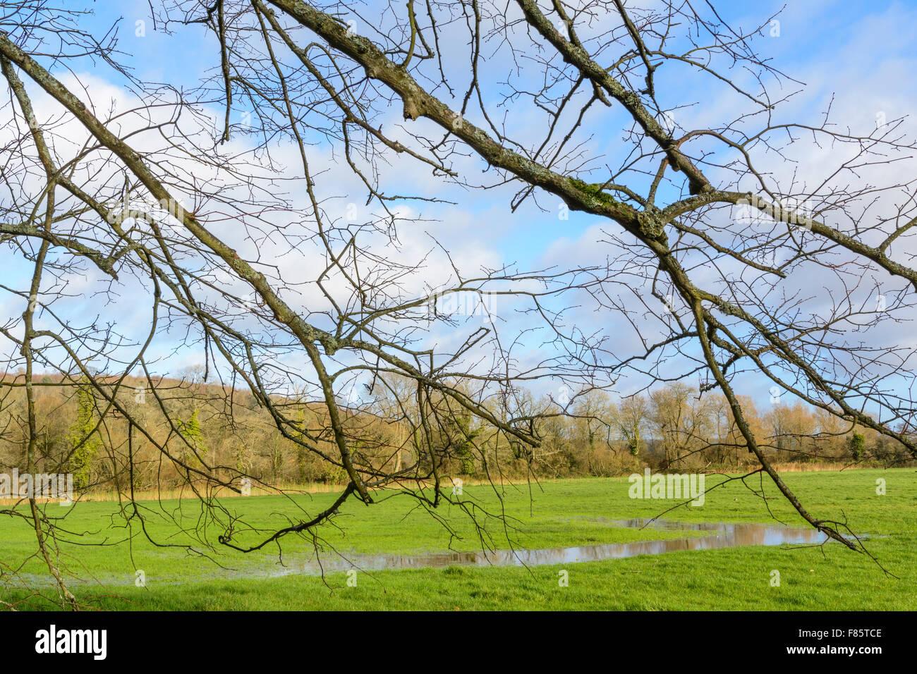 Campo allagato in inverno in Arundel, West Sussex, in Inghilterra, Regno Unito. Immagini Stock
