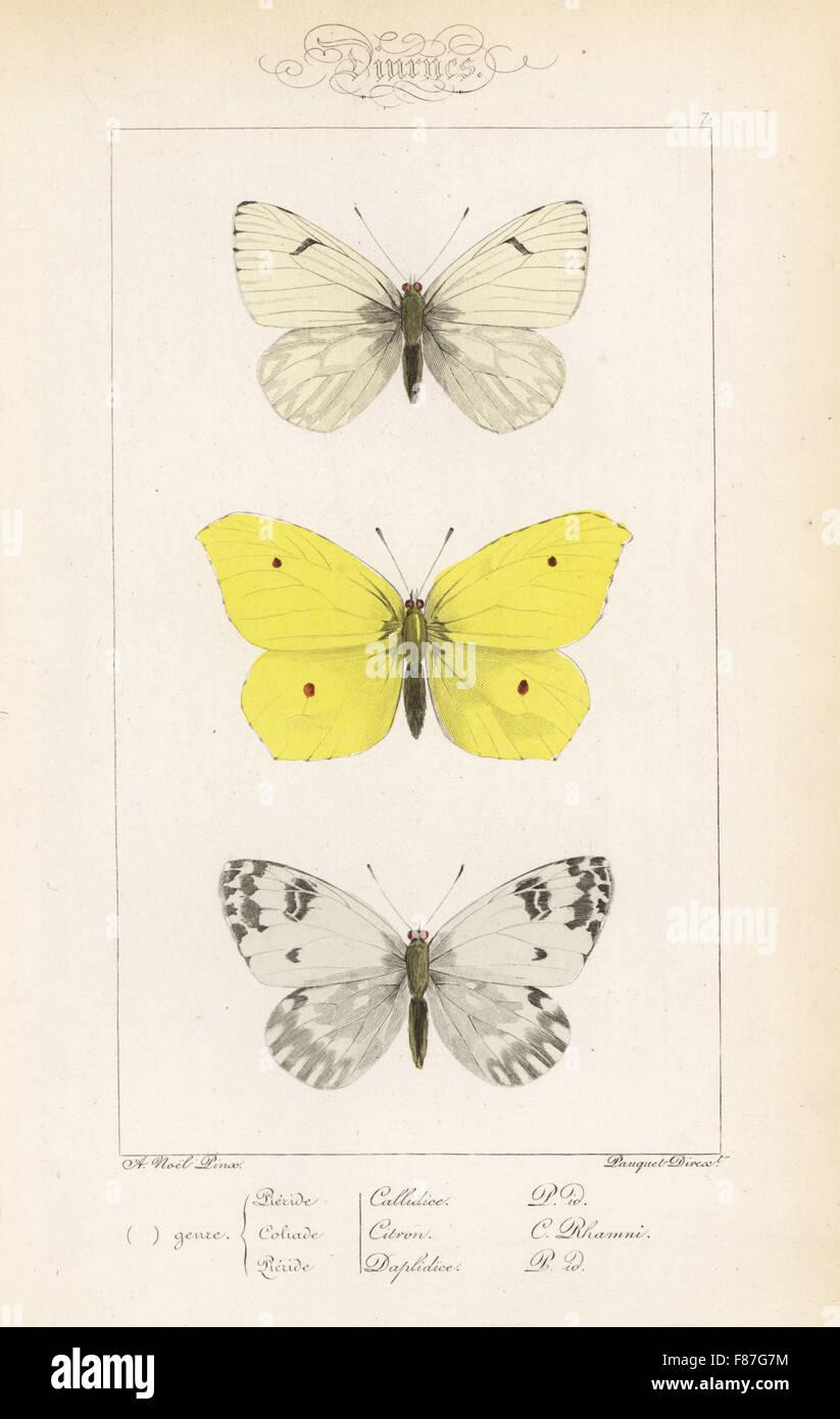 Bagno di nobili bianco, Pontia callidice, brimstone, Gonepteryx rhamni e bagno bianco, Pontia daplidice. Handcolored Foto Stock