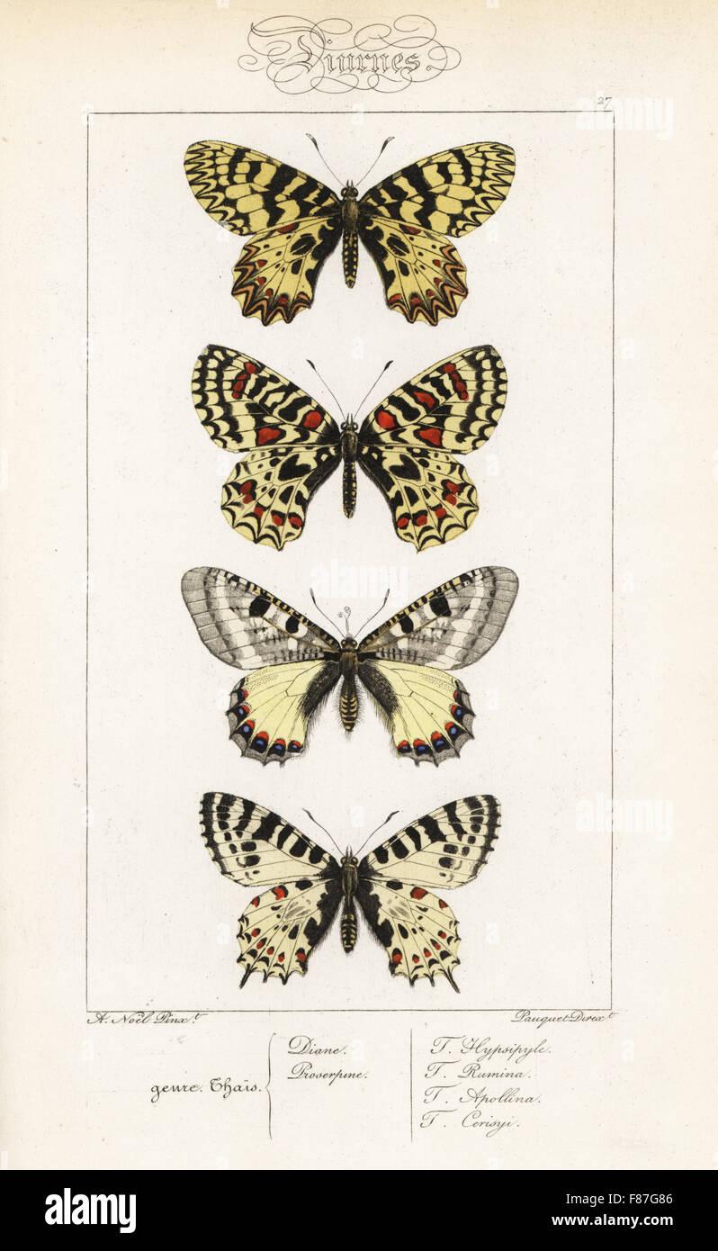 Festone meridionale, Zerynthia polissena, Spagnolo festone, Zerynthia rumina, falso apollo, Archon apollinus, e Foto Stock