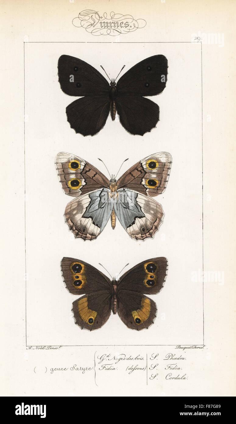 Dryad, Minois dryas, striped temolo, Hipparchia fidia, e grande fuligginosa satiro, Satyrus ferula. Handcolored Foto Stock
