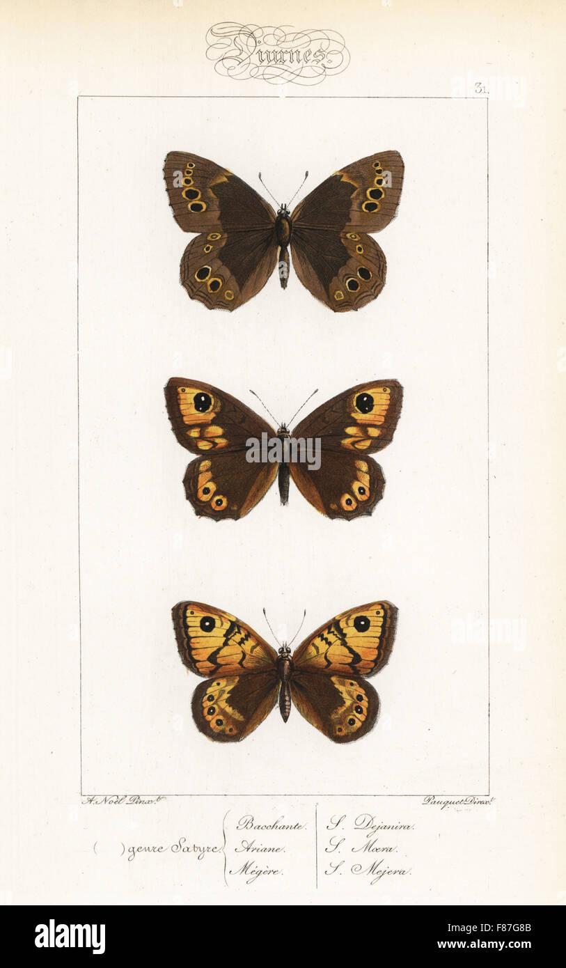 Woodland brown, Lopinga achine, grande parete marrone, Lasiommata maera e la parete butterfly, Lasiommata megera. Foto Stock