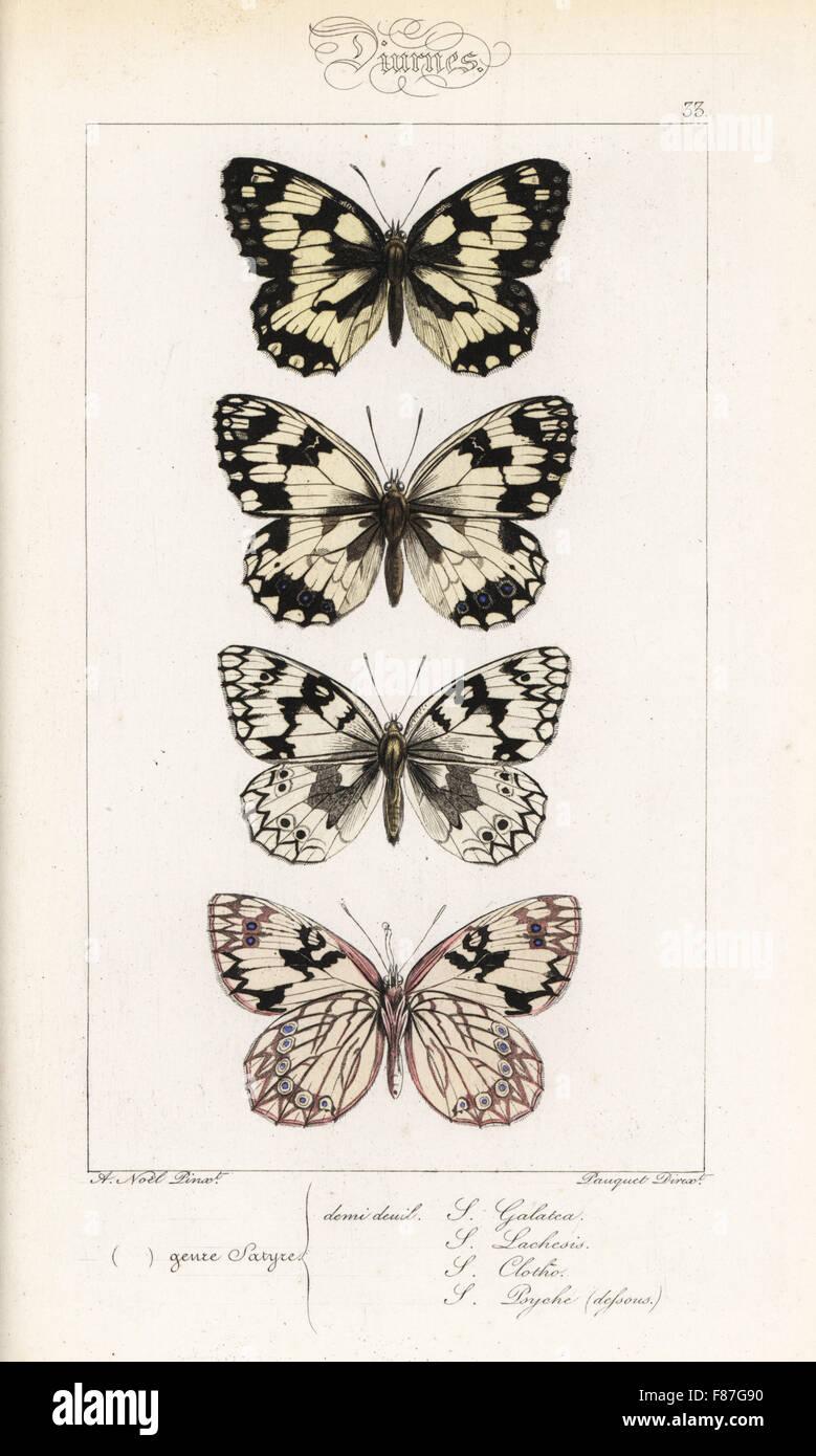 In marmo bianco, Melanargia galathea, Iberian in marmo bianco, Melanargia lachesis, Melanargia clotho e western Foto Stock