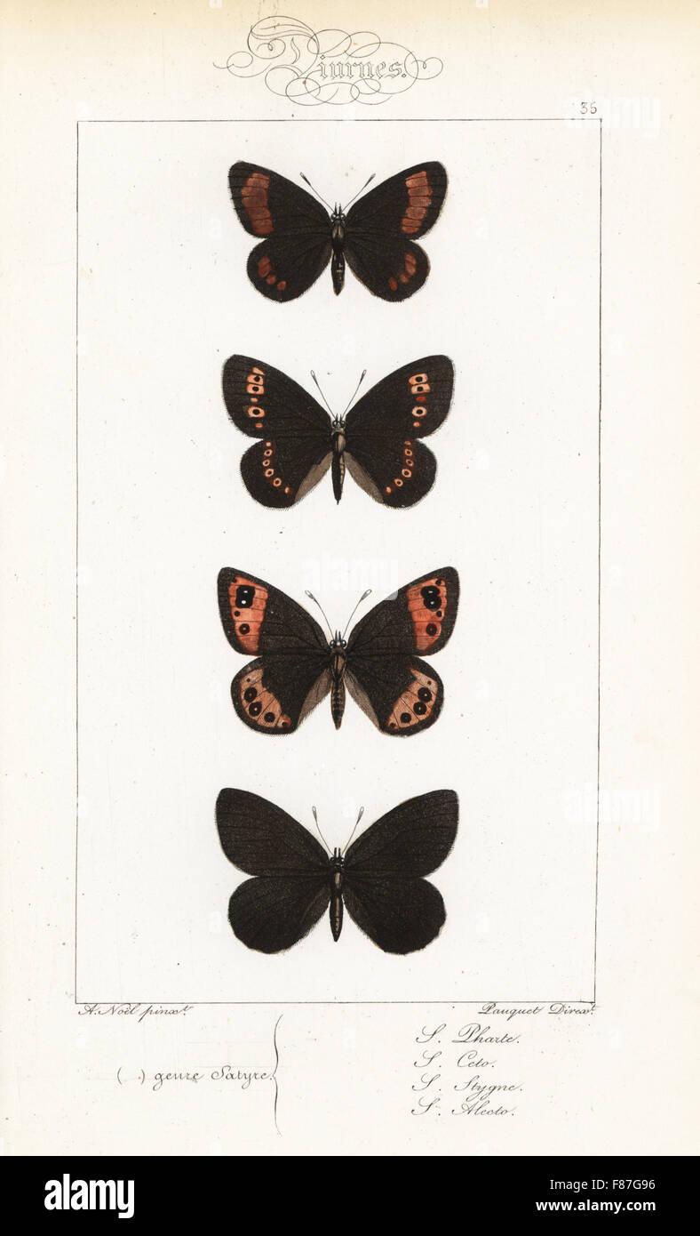 Blind ringlet, Erebia pharte, mandorla-eyed ringlet, Erebia alberganus, Piemonte ringlet, Erebia meolans e fuligginosa Foto Stock