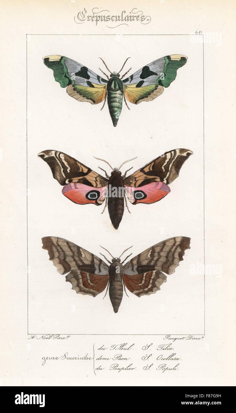 Lime, hawkmoth Mimas tiliae, eyed hawkmoth, Smerinthus ocellatus, e il pioppo hawkmoth, Laothoe populi. Handcolored Foto Stock
