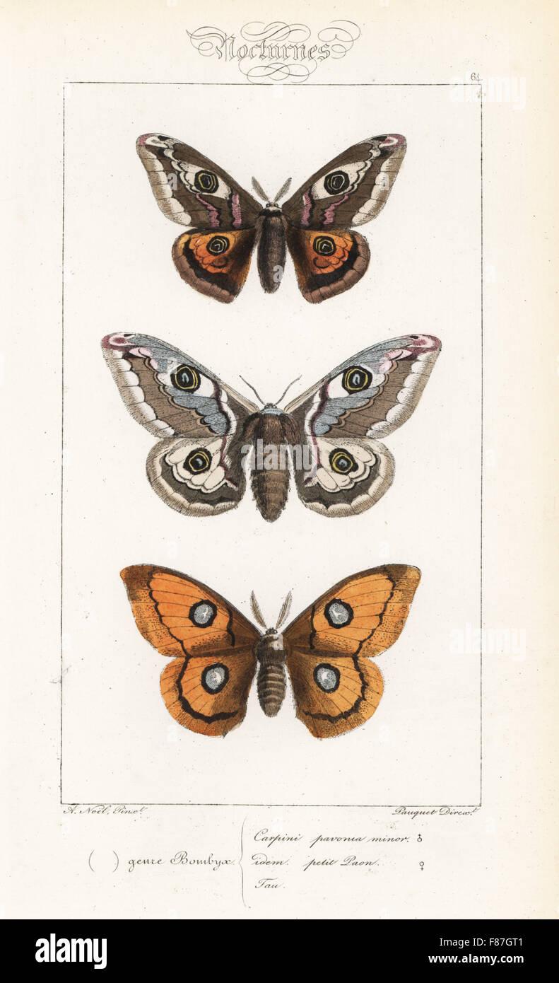 Piccolo imperatore moth, Saturnia pavonia, maschio e femmina, e il tau imperatore, Aglia tau. Handcolored incisione Foto Stock