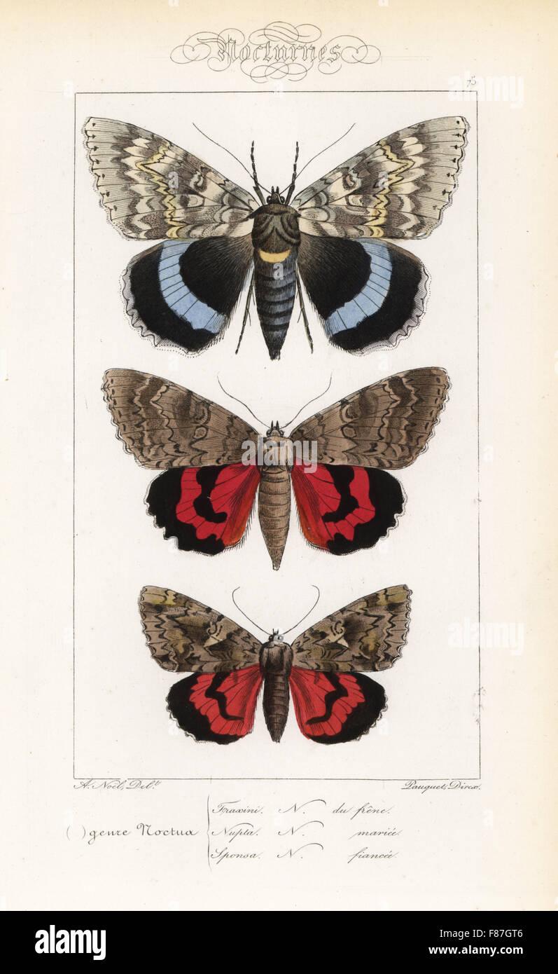 Blu, underwing Catocala fraxini, rosso underwing, Catocala nupta e dark crimson underwing, Catocala sponsa. Handcolored Foto Stock
