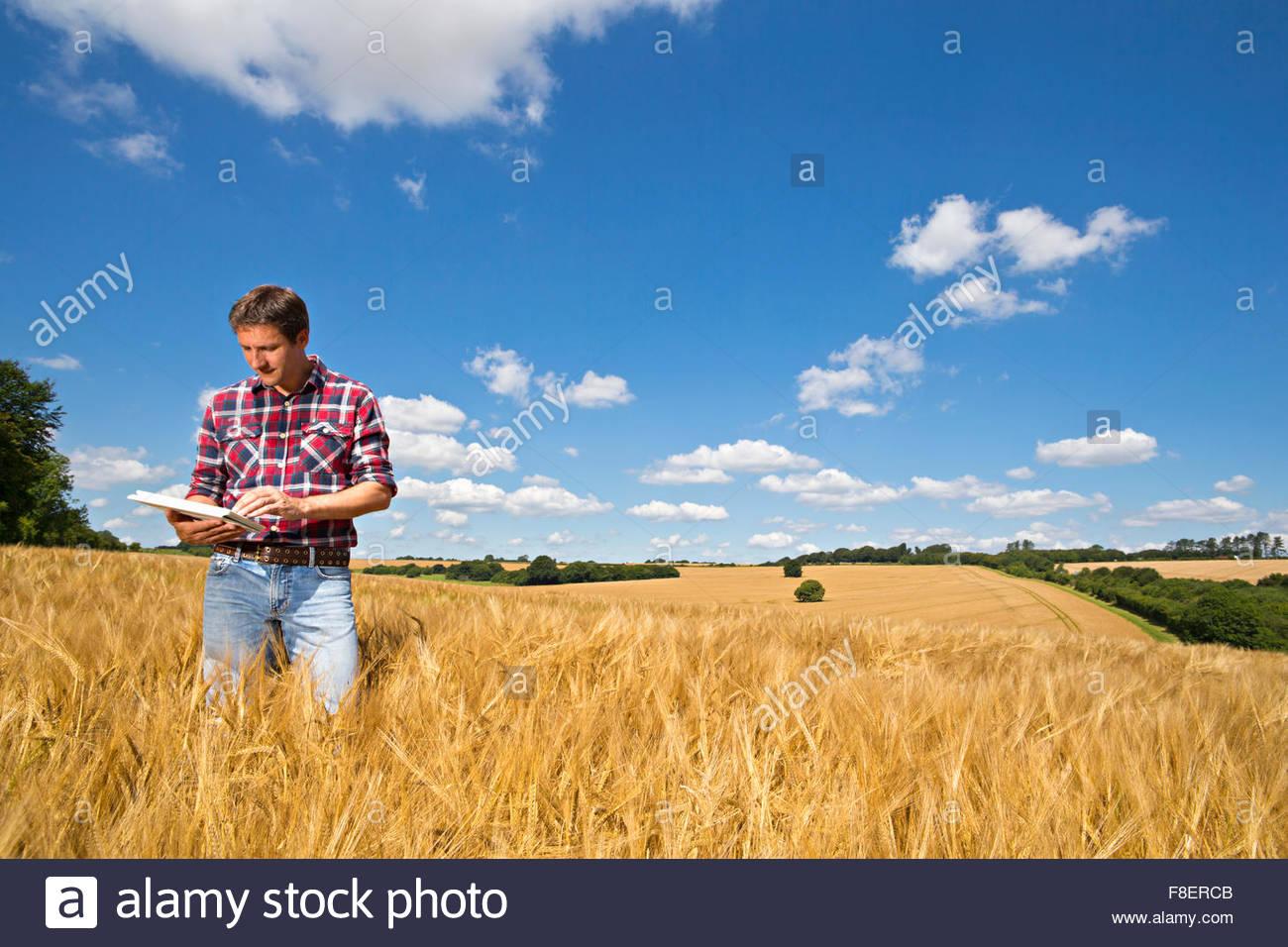 Contadino con tavoletta digitale nella soleggiata rural raccolto di orzo campo in estate Immagini Stock