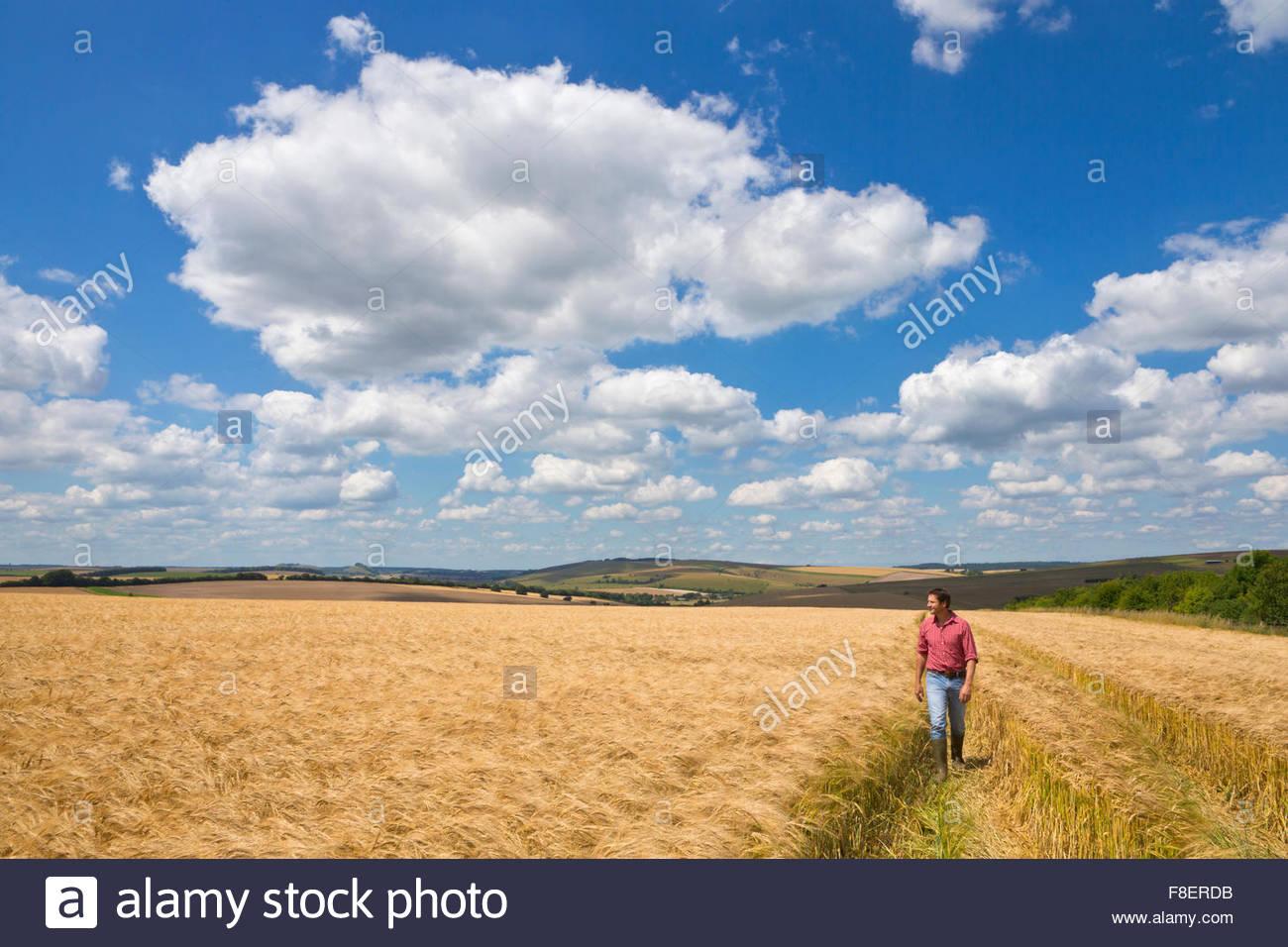 Coltivatore a piedi attraverso sunny rural raccolto di orzo campo in estate Immagini Stock