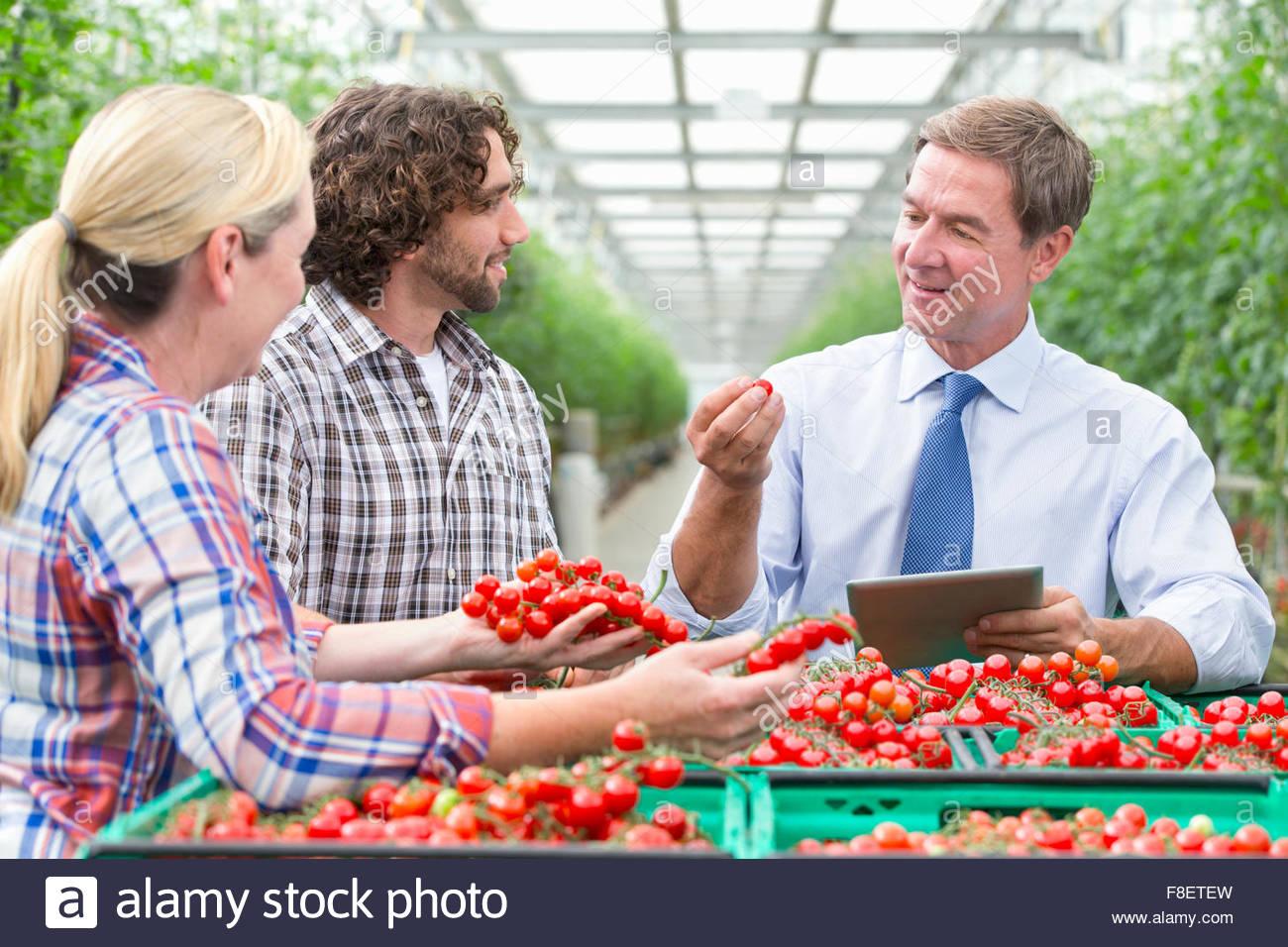 Imprenditore con tavoletta digitale e i coltivatori di ispezionare mature vite rossa i pomodori di serra Immagini Stock
