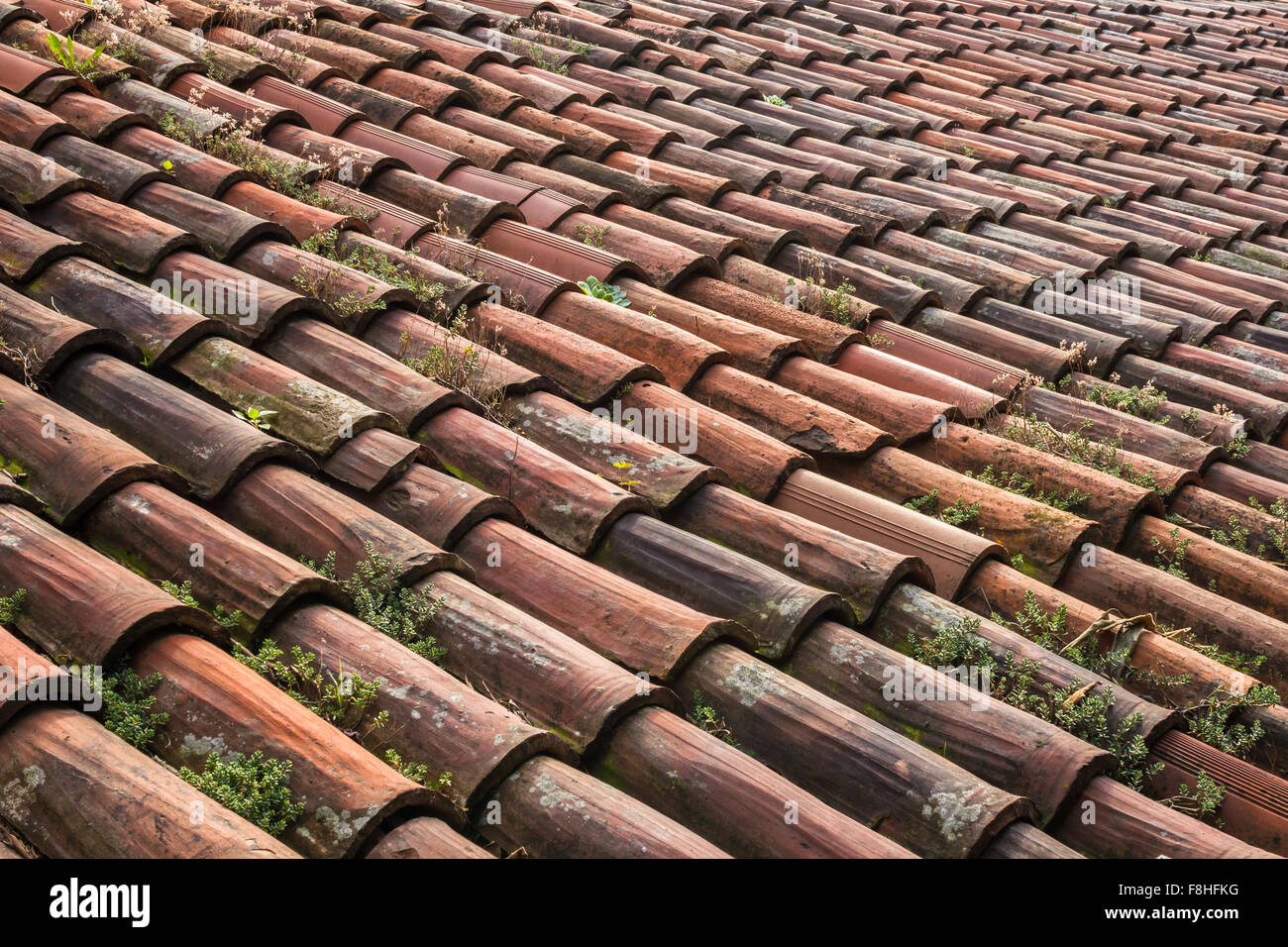 Un tetto costituito da piastrelle vecchie e logore con vegetazione