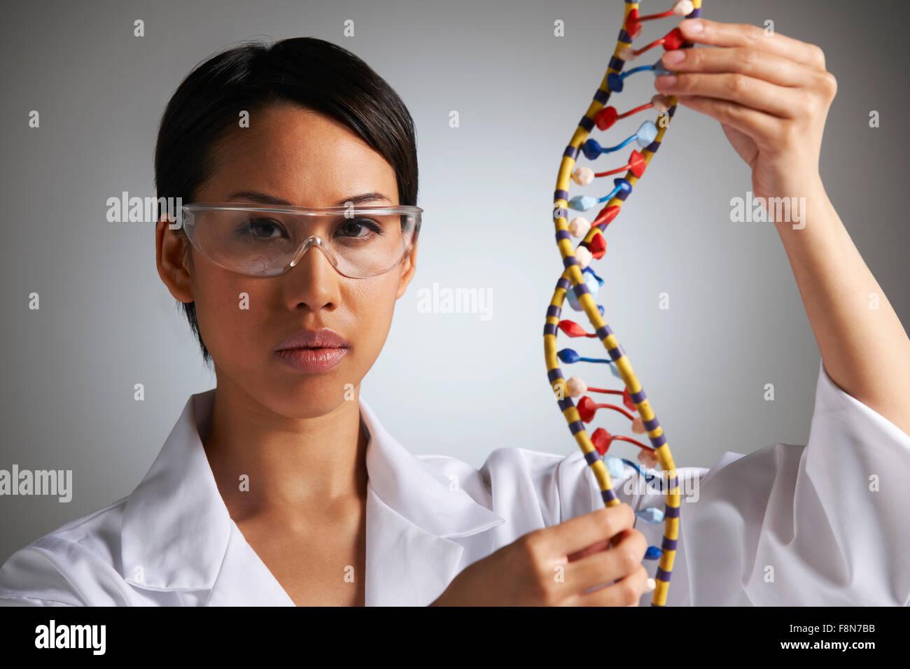 Donna scienziato studiando il modello molecolare in forma di elica Immagini Stock