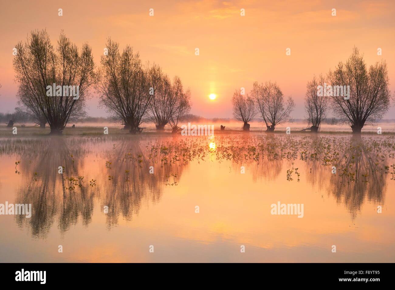 Sunrise paesaggi di Biebrza National Park, Polonia Immagini Stock
