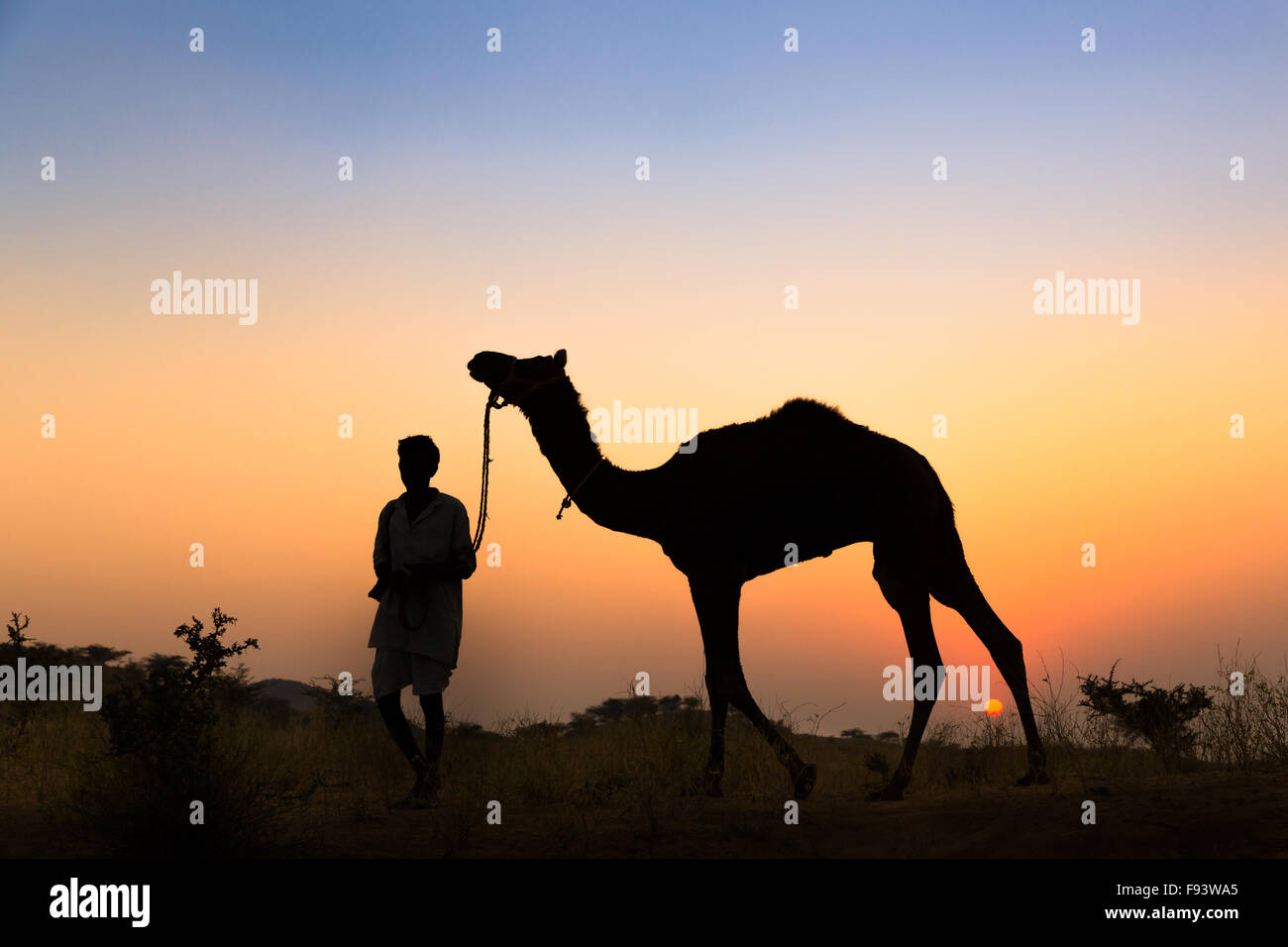 Sunset, silhouette di un uomo a tenere le redini del suo cammello, Pushkar Camel Fair, Pushkar, Rajasthan, India Immagini Stock