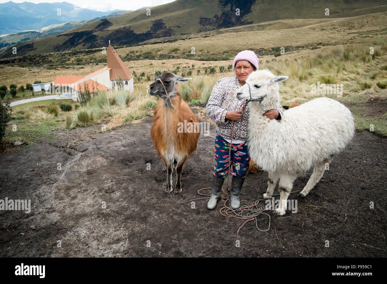 Sul lato est del vulcano Pichincha , Quito , Ecuador. Una donna con il suo alpaca Immagini Stock