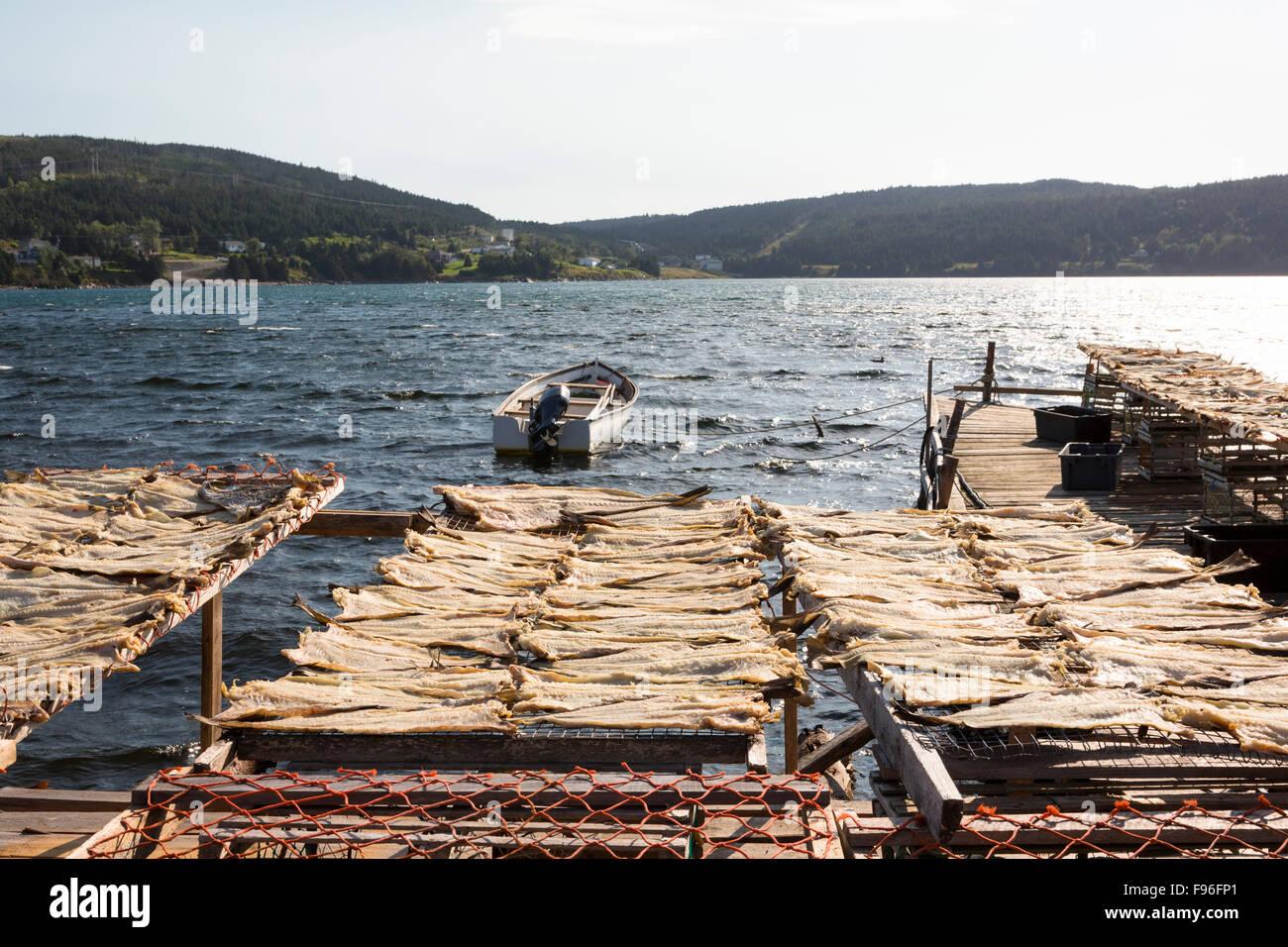 Cod stenditoi, cuore del contenuto, Terranova, Canada Immagini Stock