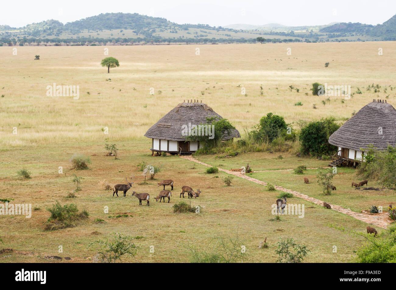 Apoka Safari Lodge, Kidepo Valley National Park, Uganda Immagini Stock