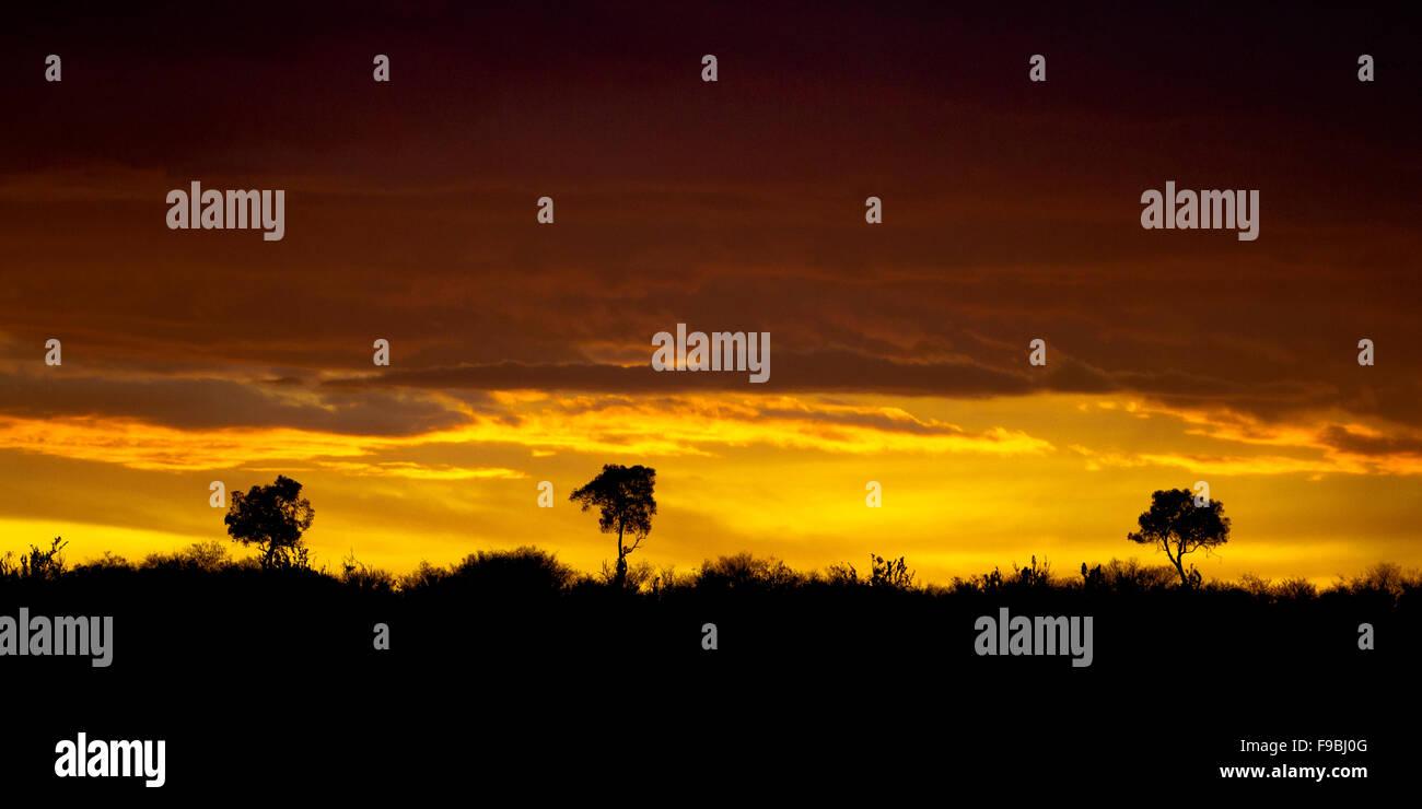 3 alberi in un tramonto africano Foto Stock
