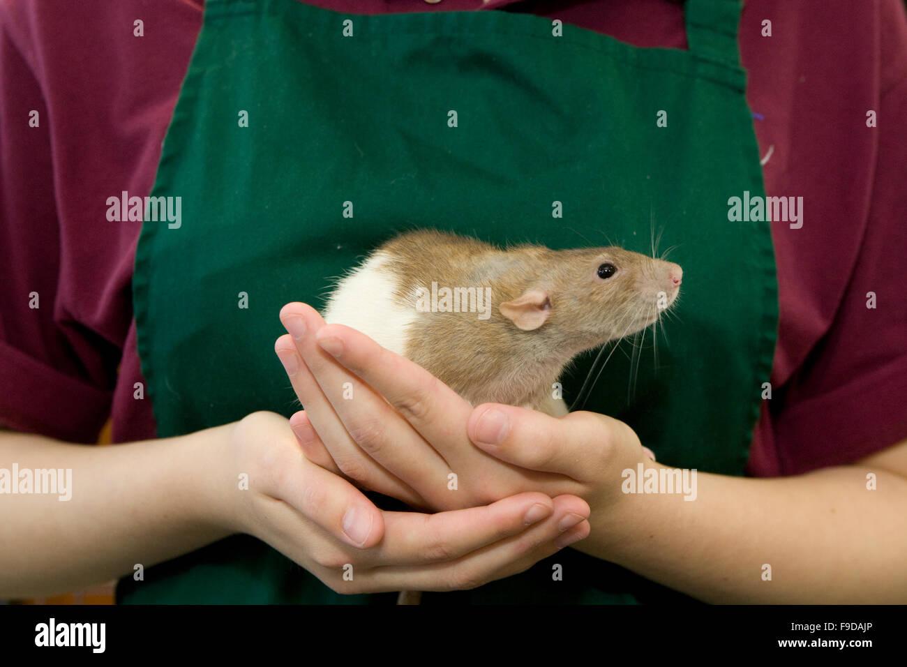Benessere degli animali Immagini Stock