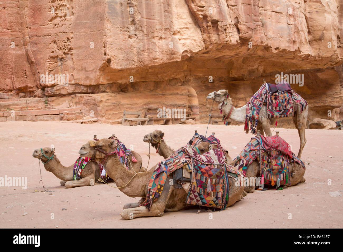 Cammelli nella zona del tesoro, Petra, Sito Patrimonio Mondiale dell'UNESCO, Giordania Foto Stock