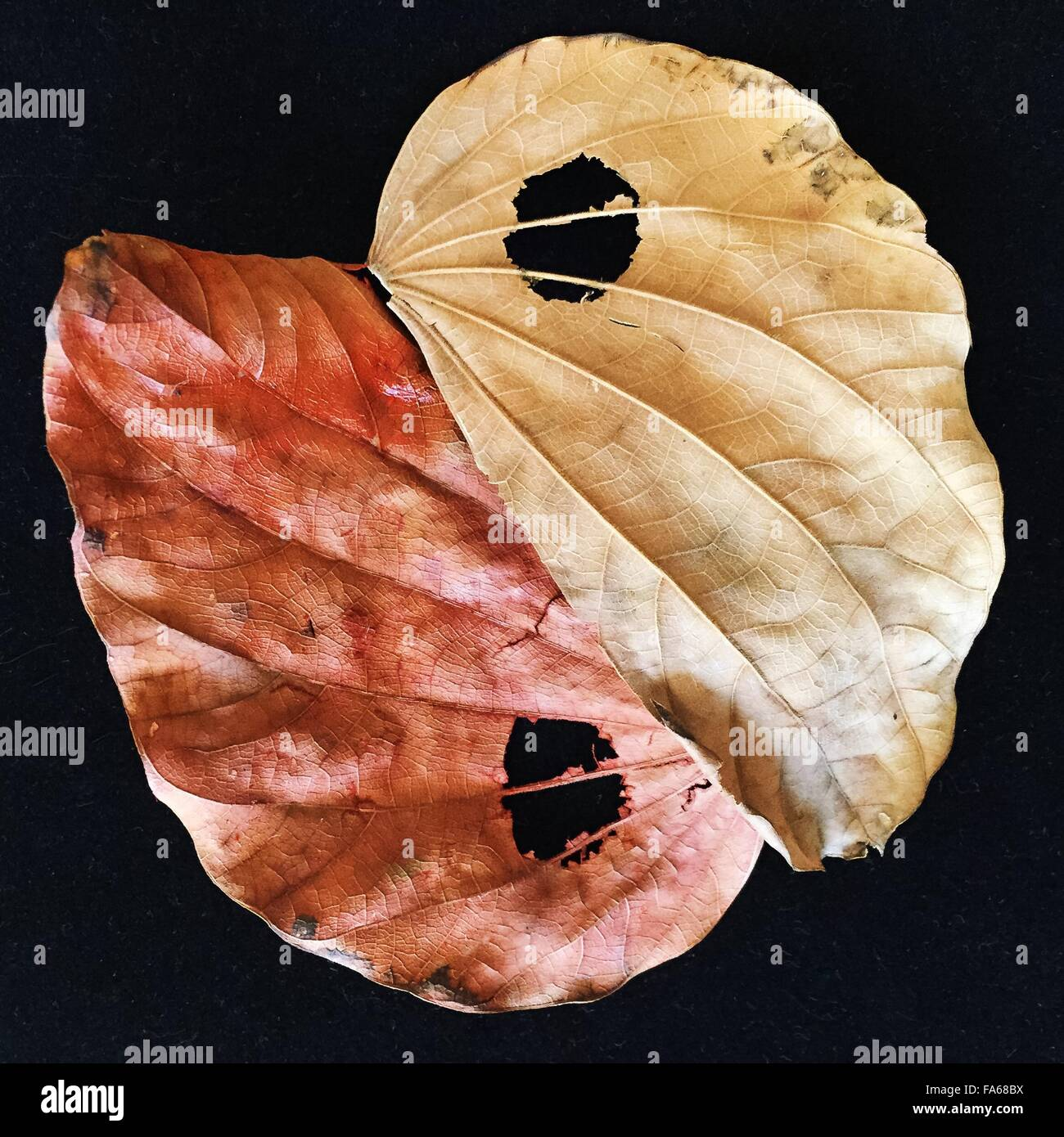 Foglie di autunno in Ying e Yang forma Immagini Stock