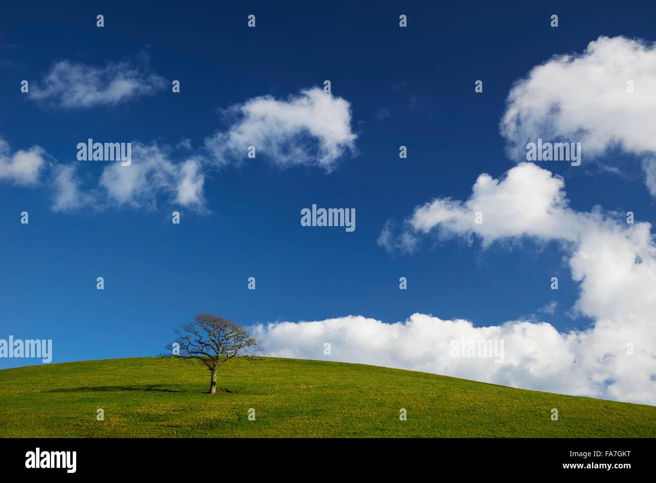 Un singolo albero sul pendio di una collina Immagini Stock