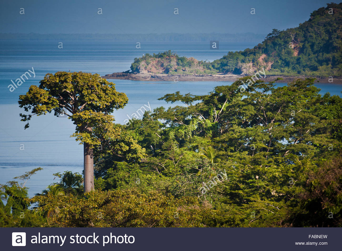 La foresta pluviale a Punta Patino riserva naturale, provincia di Darien, Repubblica di Panama. Immagini Stock