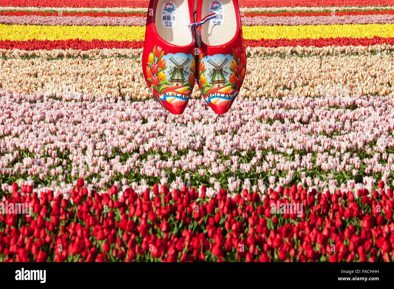 Campi di Tulipani vicino a giardini Keukenhof Lisse, Paesi Bassi, con un paio di zoccoli. Immagini Stock