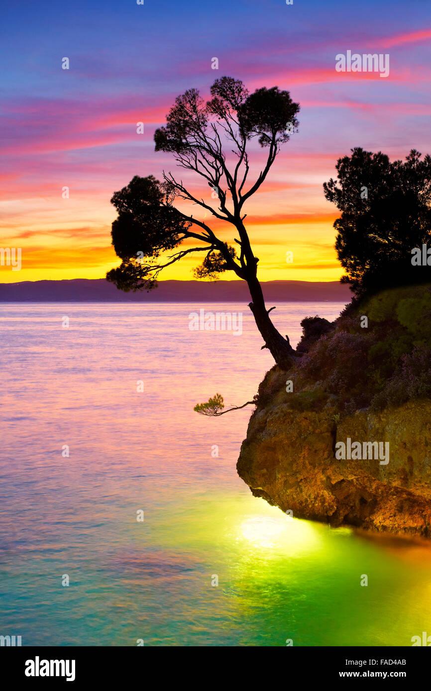Da solo singolo albero a Brela spiaggia al tramonto, Makarska Riviera paesaggio, Croazia, Immagini Stock