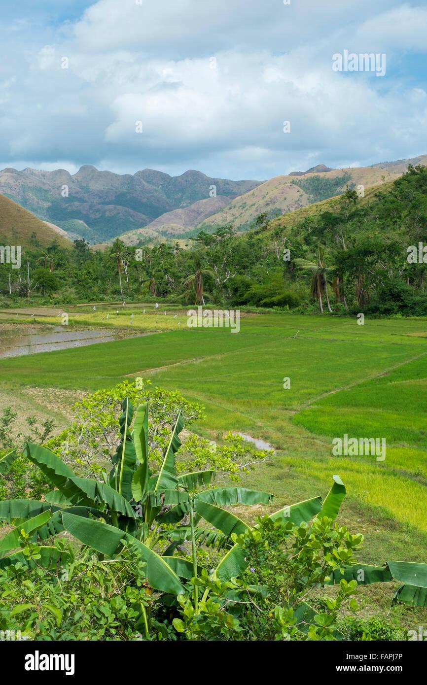 Le risaie nelle Filippine Immagini Stock