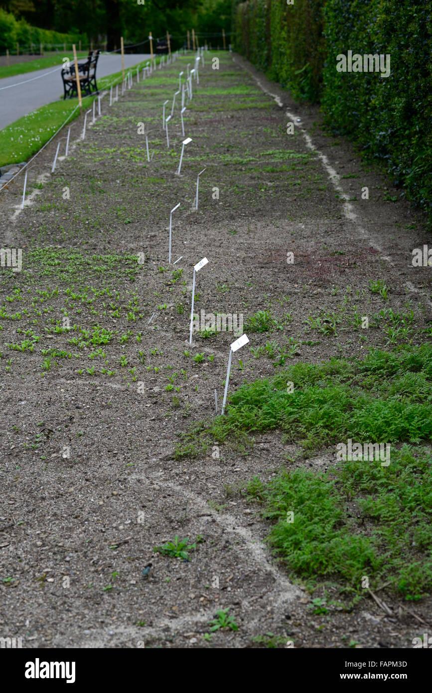 Annuale di layout letto lay out marchio sabbia segna la marcatura biancheria letti semi semi di seminare la semina Immagini Stock
