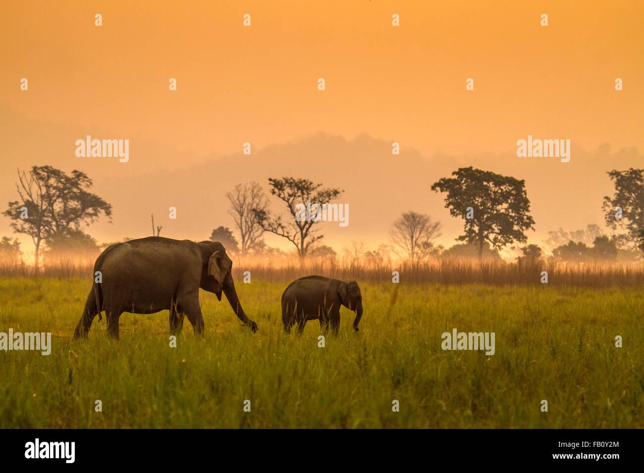 Elephant con vitello Immagini Stock