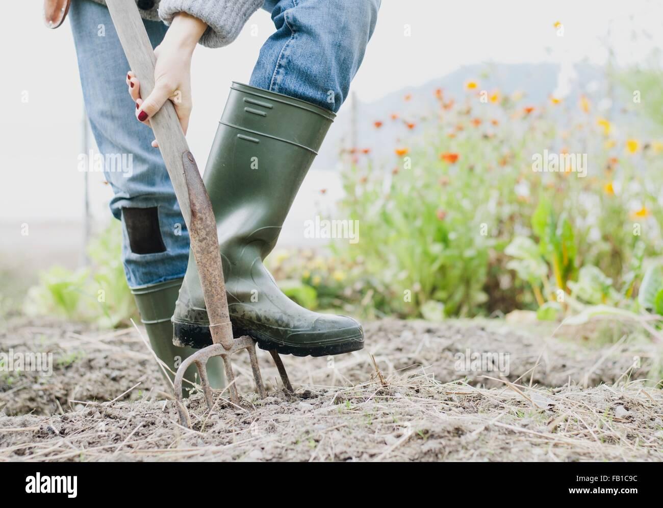 Ritagliato colpo di donna di indossare stivali di gomma di scavo giardino organico con forca Immagini Stock