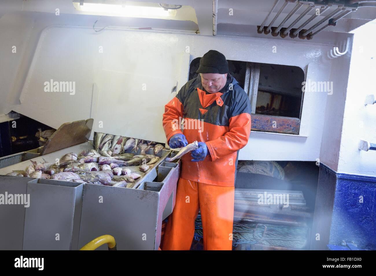Fisherman eviscerazione pesce sul peschereccio per traino Immagini Stock