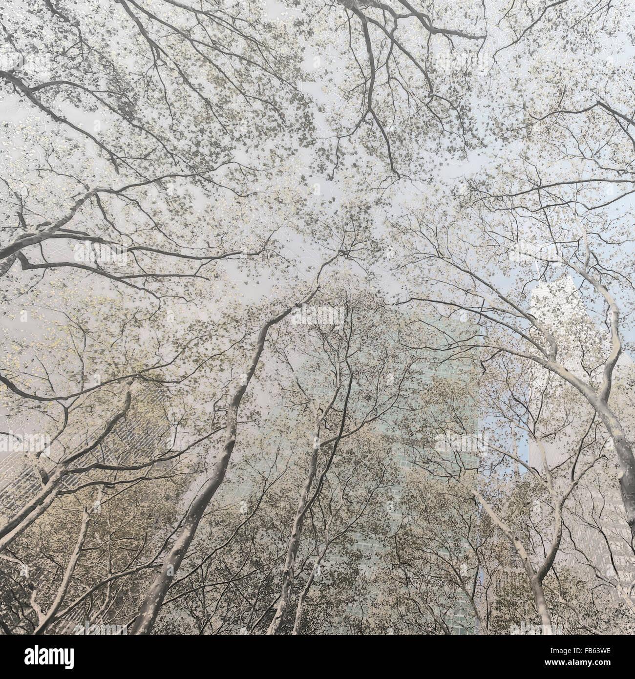Vista da un parco, Architettura in New York City, Stati Uniti d'America Immagini Stock