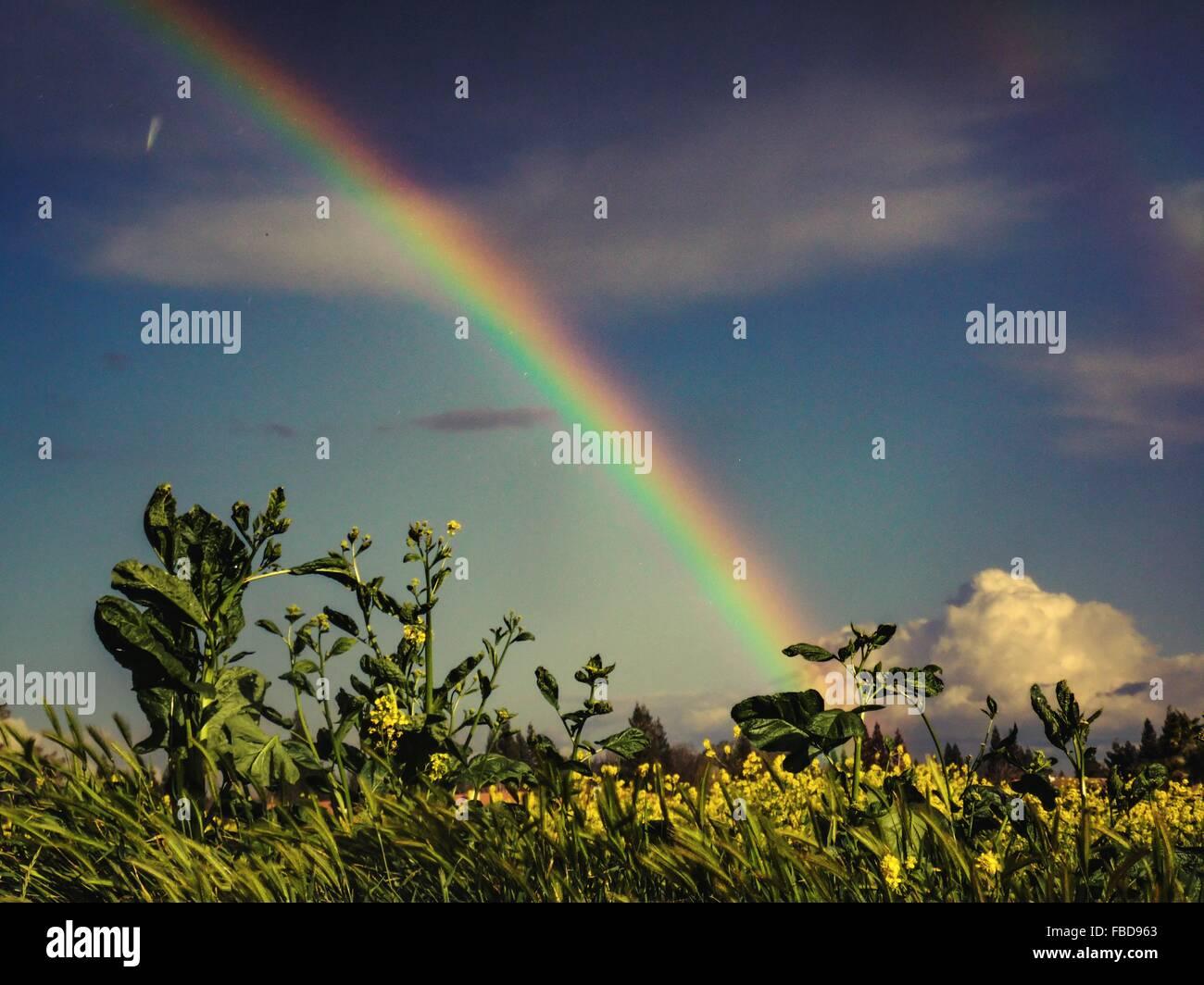 Vista di Rainbow oltre il paesaggio di campagna Immagini Stock