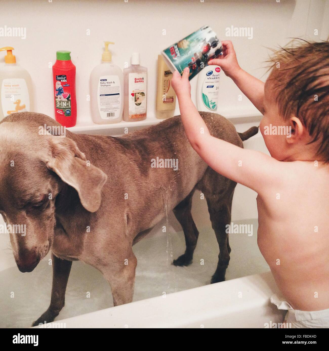 Baby Boy il lavaggio del suo cane Immagini Stock