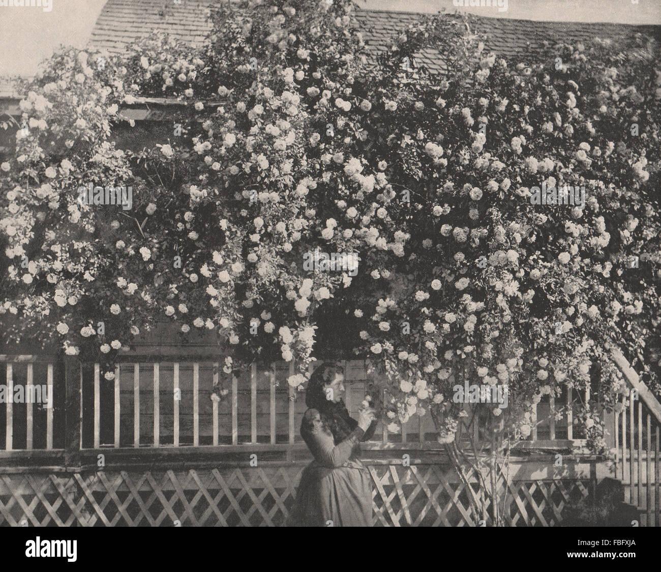 Una casa adornata con rose, nel sud della California, antica stampa 1895 Immagini Stock