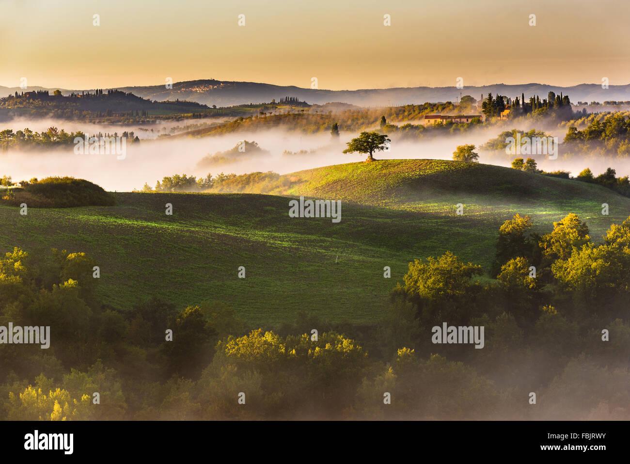 Alberi e frutteti nei campi italiani. Toscana Autunno giorno. Immagini Stock