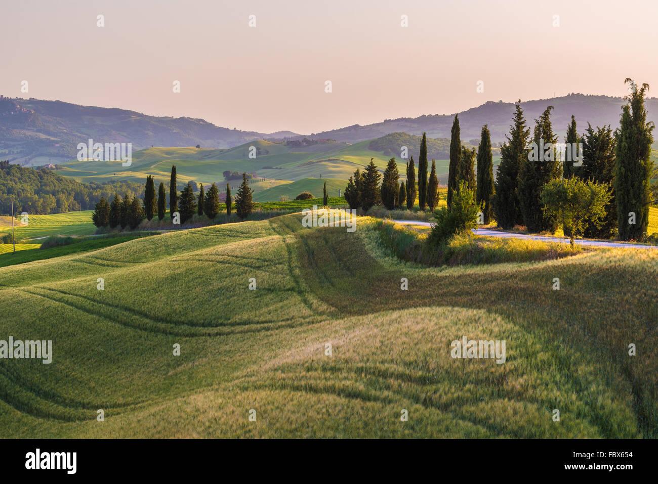 Tranquillo campo estivo in Toscana Immagini Stock