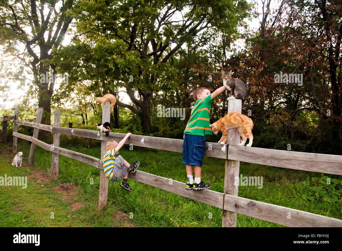I bambini e i gatti sulla staccionata in legno sotto gli occhi di un cane vigile Immagini Stock
