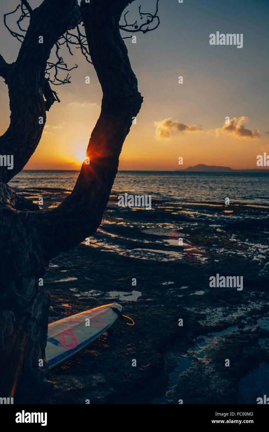 Silhouette di albero di raggi di luce e la tavola da surf a Portlock, tramonto su Oahu, Hawaii, Stati Uniti d'America. Immagini Stock