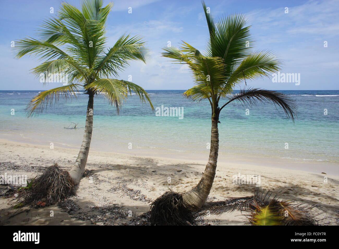 Impressioni da sole e verde Costa Rica Immagini Stock