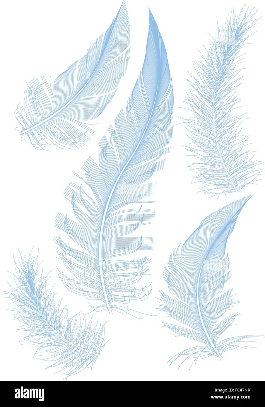 Set di liscio piuma blu, vettore Immagini Stock