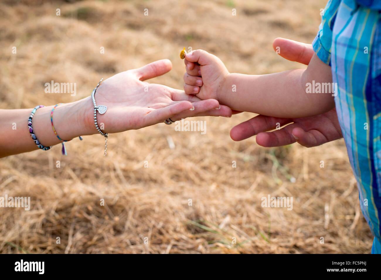 Raggiungendo genitore per bambino la mano nel campo Immagini Stock