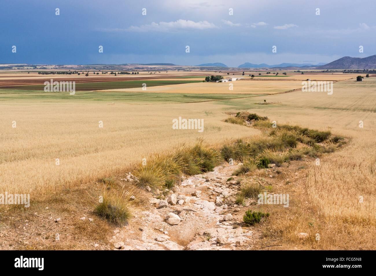 Campo de cereales bajo onu cielo de Lluvia, Murcia, Spagna. Immagini Stock